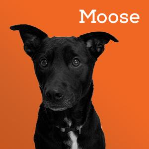 Moose - Head of Security at SERVCON