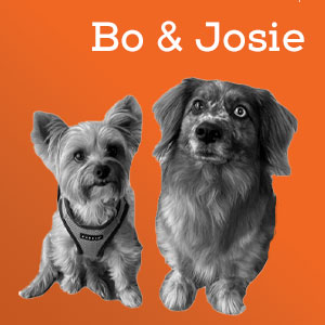 BO&JOSIE_ORANGE